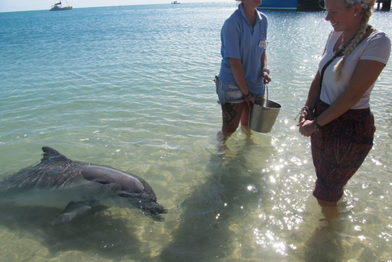 Ningaloo Reef – Delfine in Monkey Mia
